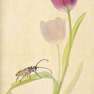 Tulip with beetle print