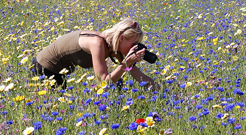 Fionna taking pictures of flowers and insects