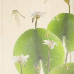Dragonflies with Lily Pads